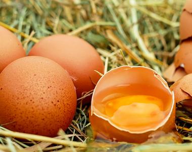 Detección de Fipronil en huevos de  gallinas ponedoras  procedentes de Bélgica y Holanda.