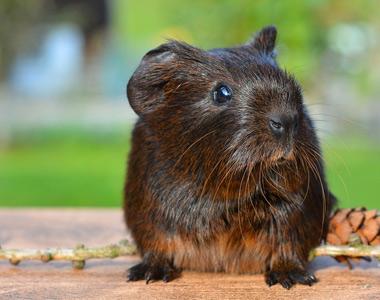 Presencia de excrementos de roedores y piedras en linaza orgánica de Austria
