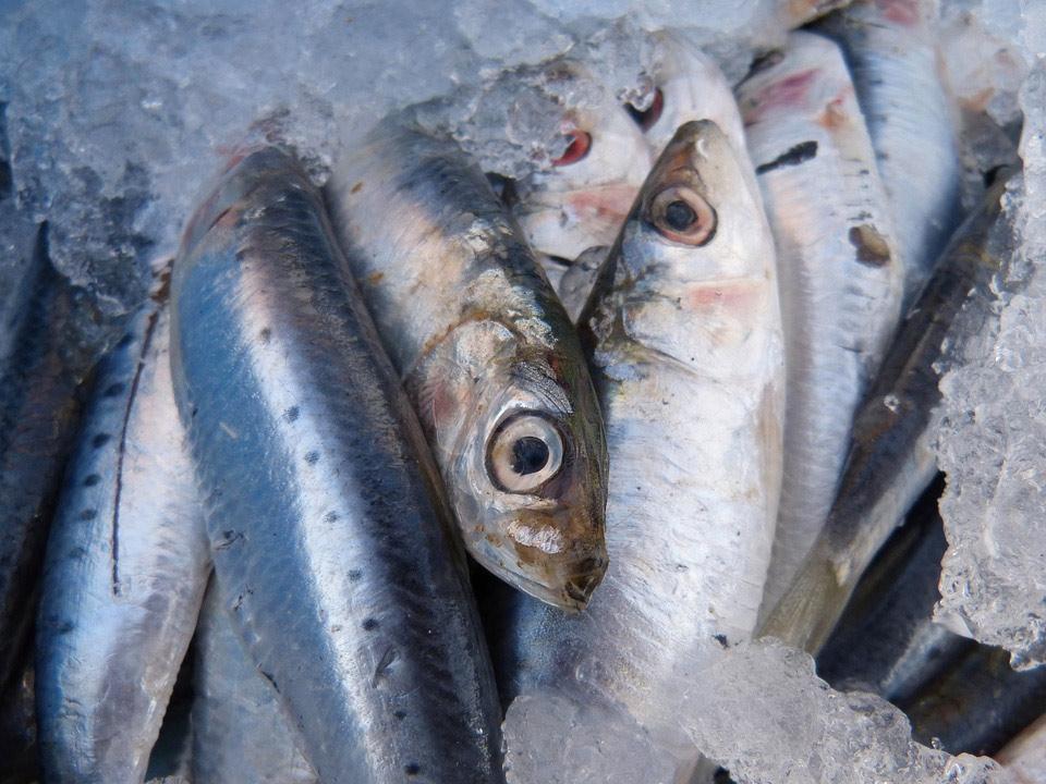 Sulfitos sin declarar en una marca de sardinas